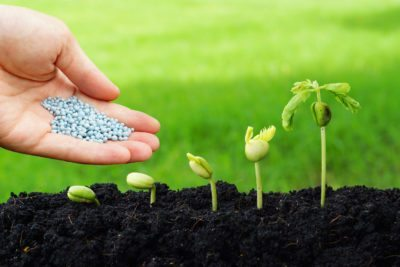 Regular Fertilizer Inspections Will Protect Your Home